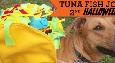 Tuna's Taco Delight | Halloween Dog Costume